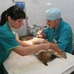Хирургия для животных (3)