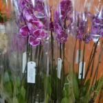 Цветочная лавка_купить орхидею в Мелитополе