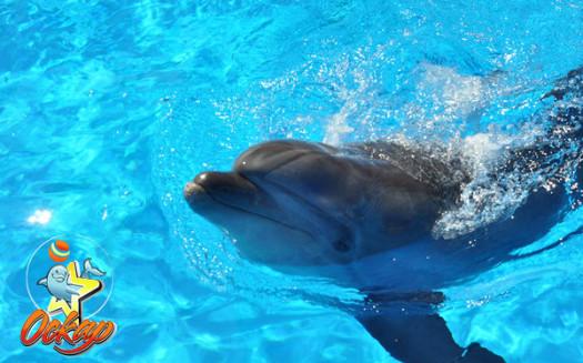 Оскар дельфинарий в Кирилловке