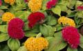 Цветочный рай в Мелитополе (1)
