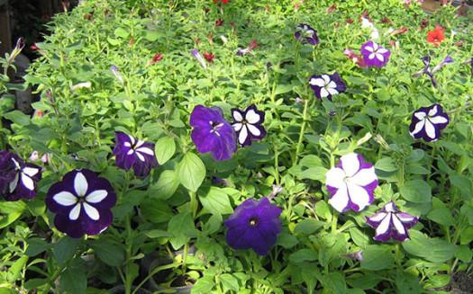 Цветочный рай в Мелитополе (4)