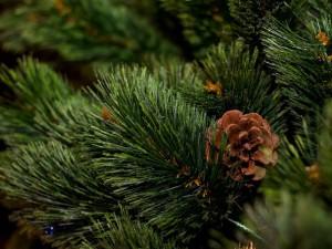 елки в мелитополе