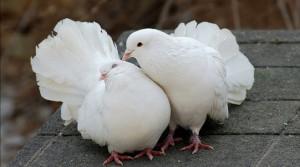 выставка птиц в мелитополе