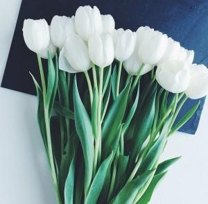 цветы мелитополь