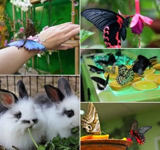 выставка бабочек и кроликов в Мелитополе