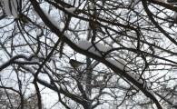 Мелитополь зимой-11