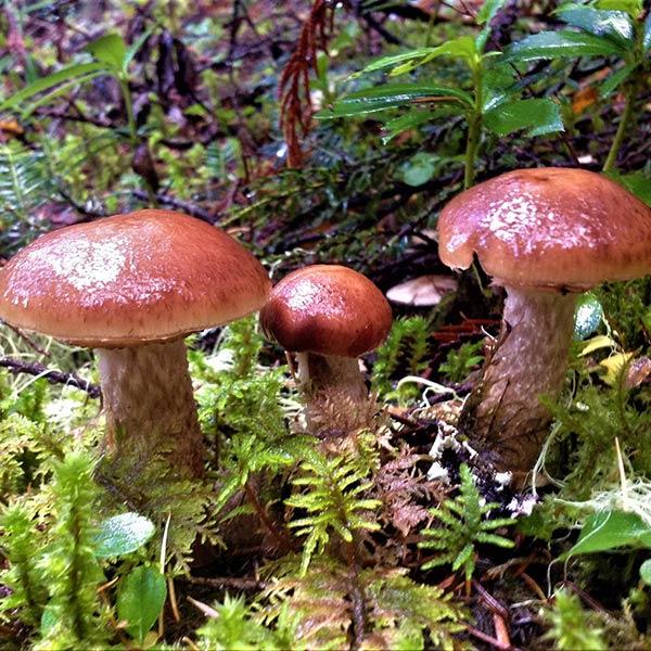 «Тихая охота» или что надо знать о сборе грибов