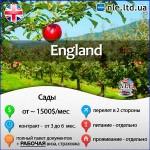 NLE: працюй, заробляй, англійську вивчай