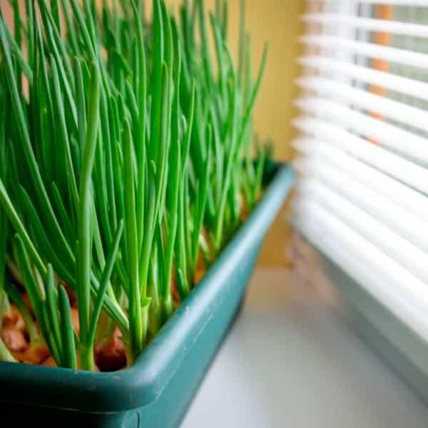 З підвіконня – на стіл: як виростити город на вікні