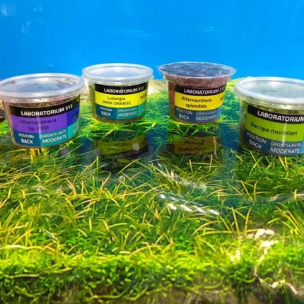 ZooMaг пропонує рослини in-vitro